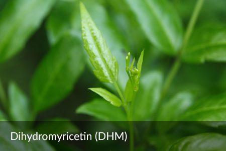 Dihydromyricetin (DHM)